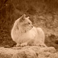 кот у моря 2. :: Андрeй Владимир-Молодой