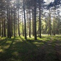 Летний день в лесу. :: Глен Ленкин
