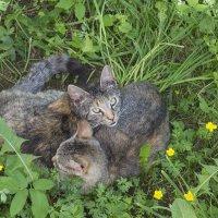 Котята :: Aнна Зарубина
