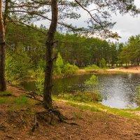 Лесное озеро. :: Александр Тулупов