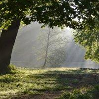 Утро в старом парке.... :: Юрий Цыплятников