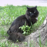 Бездомный кот. :: Мила Бовкун