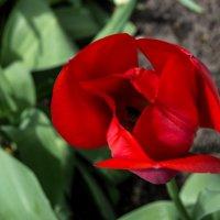 Ярко красный :: Мария Букина