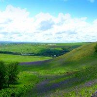 Уральские холмы в цвету :: Андрей Заломленков
