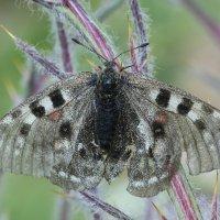 бабочка :: Alima Назарова