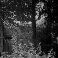 лесная дверь :: Анастасия Алёшина