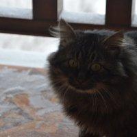 Зимний кот :: Dana