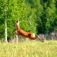 Прыжок :: Геннадий Ячменев
