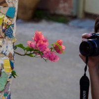 Урок фотографии :: Alex Molodetsky