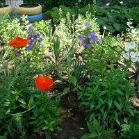 Уходящая весна в нашем дворе :: Нина Корешкова