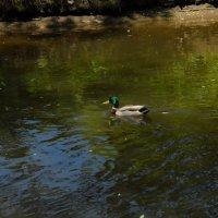В плаванье :: Денис Усиков