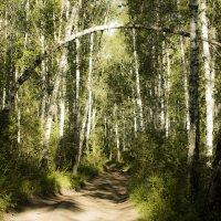 Дорога в лесу :: Юлия окладникова