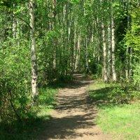 По лесным дорожкам..... :: Валентина Жукова