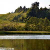 Лебединое Озеро :: Dana