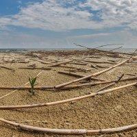 Берег Куршского залива :: Владимир Самсонов