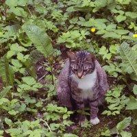 Котик на траве :: Aнна Зарубина