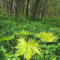 Лето яркой зеленью одето..... :: Tatiana Markova