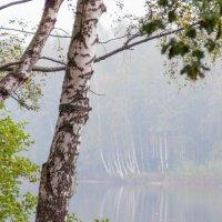 В парке туман :: Виталий