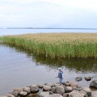 Финский залив :: Татьяна Калинина