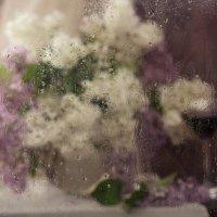 Сирень и дождь :: Татьяна
