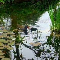 """Птенчик: """"Мама, смотри! Под водой птички! Они наши родственники?"""" :) :: Nina Yudicheva"""