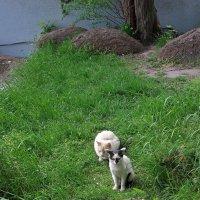 На зеленой лужайке. :: Наталья