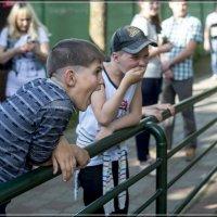 Зоопарк. У клетки с обезьяной. :: Игорь Волков
