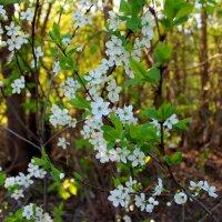 Цвета весны :: Катя Бокова
