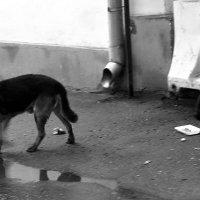 собака и кот :: Дмитрий Паченков