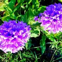 Цветы :: Вероника Озем