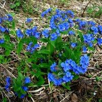 Весна :: Любовь Иванова