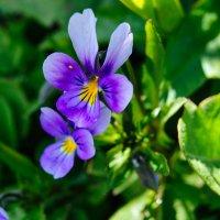 Цветочек серенивый :: Света Кондрашова