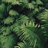 Растение :: Dana Abboud