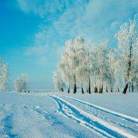 Морозное утро :: Олег Васильевич