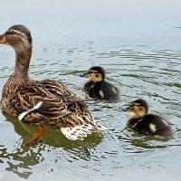 С мамкой по озеру :: Alexander