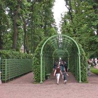 Летний сад :: Елена