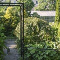 Зелёное лето :: Aнна Зарубина