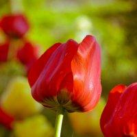 Красота в цвете :: Юлия Савицкая