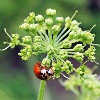 Собирая нектар :: Alexander
