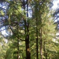 Деревья в парке :: Ольга Сорокина