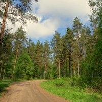 Лесные мотивы. :: Валентина Жукова