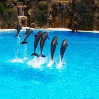 Атракцион с дельфинами :: Witalij Loewin