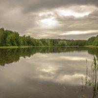 Лесное озеро (Заячье) :: Алексей Строганов
