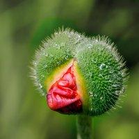кто я? цветок или птица? :: Galina