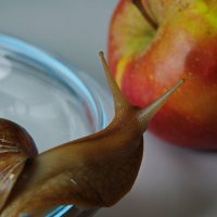 Улитка и яблоко :: Нина