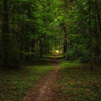 Таинственный лес :: Делана Романова