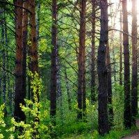 Лес :: Мария Сидорова