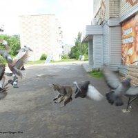 Неопытный охотник :: Дмитрий Ерохин