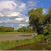 Зарастающий пруд :: Вячеслав Минаев