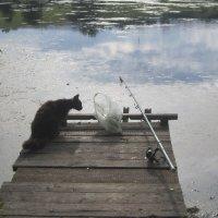 Кошка-рыбачка :: Ростислав